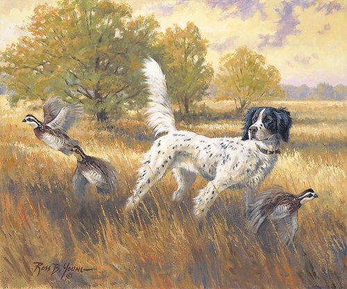 Quail hunting paintings - photo#20