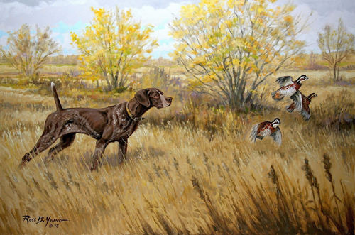 Quail hunting paintings - photo#16